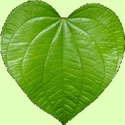 Leaf 9 Color Leaf